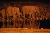 Night at Okaukuejo: elephants