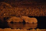 Night at Okaukuejo: black rhinoceros