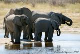 Aroe waterhole: elephants