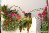 Flowers at Panarea I.