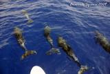 Travelling companions to Stromboli Isle