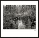 New Jersey Pine Barrens-1