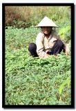 Rice Hat Squat, Chau Doc, Vietnam.jpg