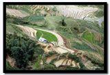 Rice Paddie Hills, Sapa, Vietnam.jpg