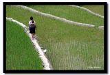 Walking on Thin Walls, Sapa, Vietnam.jpg