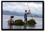 Harvesting Seaweed for Making Above Water Farms, Inle Lake, Myanmar.jpg