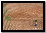 Walking Through the Fields, Bagan, Myanmar.jpg