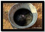 Angry Rat Dinner, Ban Gew Khan, Laos.jpg