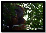 Big Face, North Sumatera, Indonesia.jpg