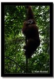 Climbing Up, North Sumatera, Indonesia.jpg