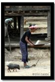Pig Close Behind, Baan Hat Sa Phiue, Laos.jpg