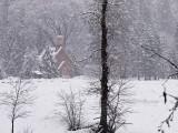 Gallery:: Yosemite Winter 2008:: February 2008
