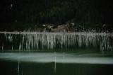 Isolated Earthquake Lake, Montana - May 2010