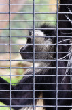 Caged Balboa Park and Zoo, San Diego, California - September 2010