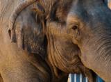 Elephant Balboa Park and Zoo, San Diego, California - September 2010