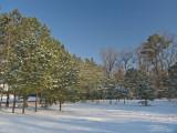 Snowy open field
