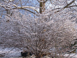 Bare branches covered in snow