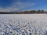 Rye field covered in snow at about 9:00 am