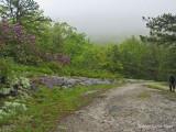 Panthertown Valley - Trail View