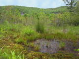 Panthertown Valley Bog