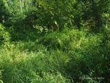 Seepage area near Dial Creek