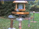 Activity at the bluebird box