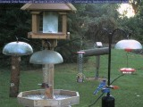 Bluejay at the mealworm feeder
