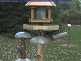 Downy and red-bellied woodpecker