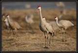 Alert cranes