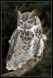 Houston (MN) Owl Festival