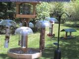 Downy woodpecker at hummingbird feeder
