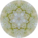Ranuculus Kaleidoscope.jpg