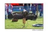 vulture sunbathing (Stanhope Show)
