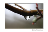 branch drop.jpg