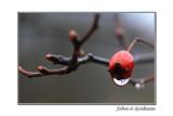 dropberry
