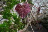 leaf on an old log