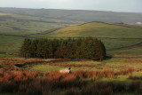 Swaledale in Weardale