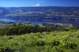 View from Tom McCall Point trail #2