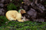 Fungus on Moss