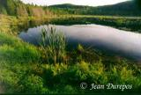 Lake tranquility