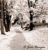 A walk through Beechwood Cemetery