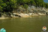 Cross bedded Alum Bluff Gp sediments Appalachicola Rv.jpg