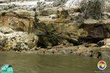 Log in Alum Bluff Group Appalchicola Rv.jpg
