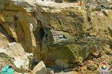 Log in Alum Bluff Group Appalchicola Rv4.jpg