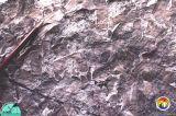 Avon Park fossil sea grass from Gulf Hammock2.jpg
