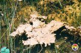 Everglades periphyton 2.jpg