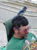Ken Campbell and Scrub Jay.jpg