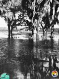 Flooding-in-1966.jpg