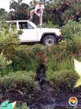 Field dangers_alligator150dpi.jpg