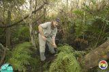 Tom Scott Filling Holes everglades tree island.jpg